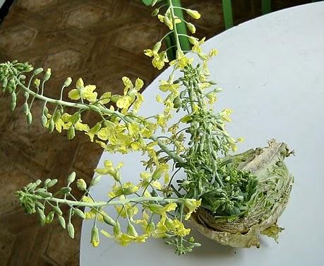 цъфнало зеле - незаконен растителен продукт