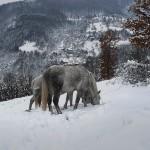 сумрак, сняг и бели коне 2
