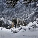 сумрак, сняг и бели коне